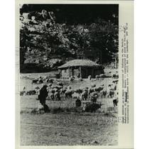 1978 Press Photo Herder and Sheep, Navajo Reservation in Arizona - noa19795