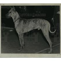 1935 Press Photo Pascha Crachenstein was grand champion at Badger Kennel club
