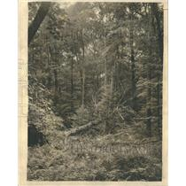 1927 Press Photo A glimpse into a corner of the real Wisconsin north woods