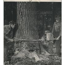 1957 Press Photo Russell Barnes and Herbert Conop Fell a Tree with Power Saws
