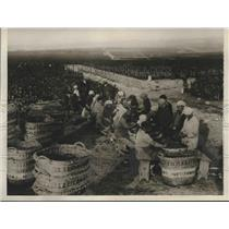1929 Press Photo Farmers on Vineyards Busily Gather Harvest, Champagne, France