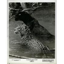 "1959 Press Photo Disney's ""Jungle Cat"" - RRX64703"