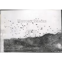 1951 Press Photo Paratroopers jump off plane - spb10220