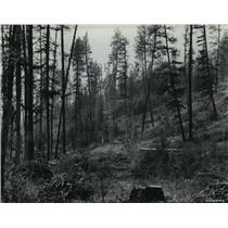 1950 Press Photo Side of mountain with trees that have been logged - spa96626
