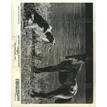 Press Photo Disney Movie, Run,Appaloosa, Run - RRX91019