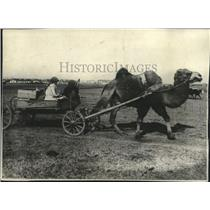 1929 Press Photo Peasant woman drives her camel to the market in Samarkand