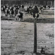 """1956 Press Photo Charles John """"Chas"""" Prescott - dfpd37941"""