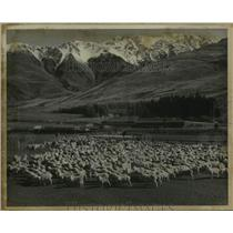 1967 Press Photo Glentanner sheep station on the South Island, New Zealand