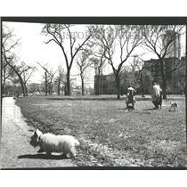 1978 Press Photo Dog Walkers Lincoln Park West Center - RRV87713