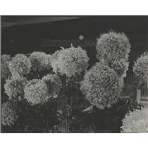 1922 Press Photo Flowers - RRY17553