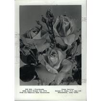 1974 Press Photo Bon Bon -Floribunda rose - RRW76553