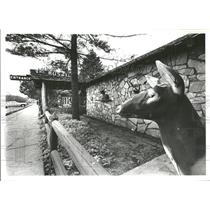1978 Press Photo Gurnee RB Leffi Gwell Don Schwartz - RRY01571
