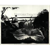 1980 Press Photo Flower White Trillium Ryerson - RRW03577
