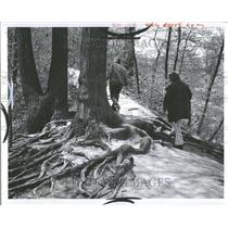 1973 Press Photo Lower Huron Park Exposed Tree Roots - RRV88997