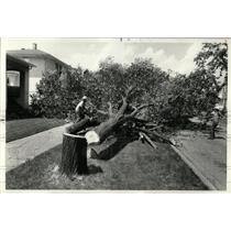 1977 Press Photo Workmen Oak Park Dutch Elm Disease - RRW93229