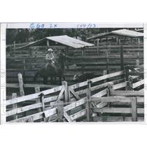 1970 Press Photo Cowboy Ropes Calf In Okeechobee, Florida. - RSH18125