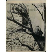 1927 Press Photo Frances Hawkins Prunes Apple Tree - nea26163
