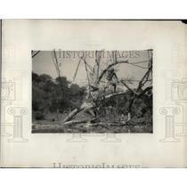 "1930 Press Photo Technician on set of ""Tender Horn"" set in Africa near a croc"