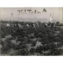 1920 Press Photo Prisoner Laborers Working in Field in Dayton