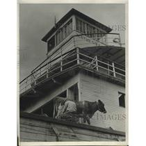 1934 Press Photo Boat on the Oregon Farm of Ralph Bainter after flood receeded