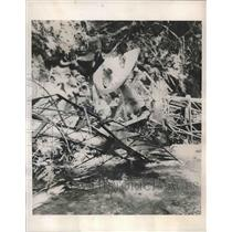 "1938 Press Photo Wreckage of the ""Nina"" cuban plane crashed in Columbia"