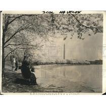 1924 Press Photo Cherry trees in blossom at D,C, Tidal Basin - nea91102
