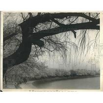 1925 Press Photo Cherry trees in bloom at D.C. Tidal Basin area