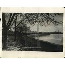 1926 Press Photo Japanese Cherry Blossoms In Washington D.C. During Spring