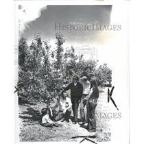 1974 Press Photo Herbert Teichman Tree Farm - RRT75249