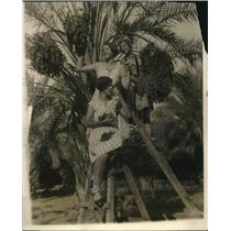 1927 Press Photo Girls getting dates from the trees in Beglet Noor date grove.