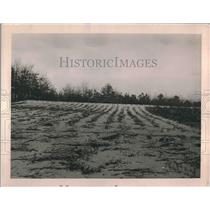 1919 Press Photo Billy Dansey Case