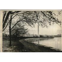 1926 Press Photo Japanese Cherry Blossoms, Washington Monument, Washington D.C.