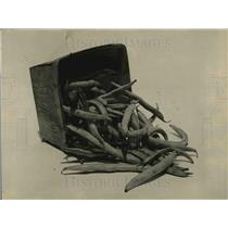 1923 Press Photo View Of Beans Freshly Picked Inside Crate