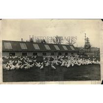 1927 Press Photo A flock of chickens at an hatchery