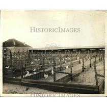 1919 Press Photo Chicken Farm