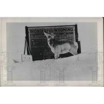 1949 Press Photo Wyoming