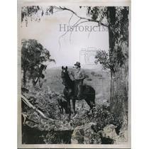 1934 Press Photo Australian outback, rider on his horse among eucalyptus trees