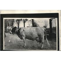 1925 Press Photo Lyons Sarcastie Roindyke's New World' Champion Cattle