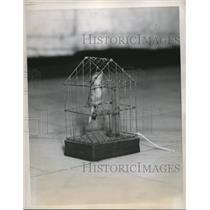 1939 Press Photo Little Toy Bird In Gilded Cage From 19th Century