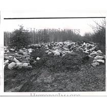 1973 Press Photo Leaf Pile made from the collection of all leaves in Painsville