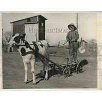 1932 Press Photo Boy has a cow wagon in NJ.