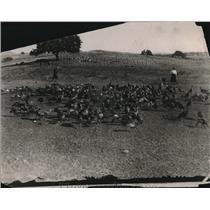 1923 Press Photo Flocks of turkeys at a farm