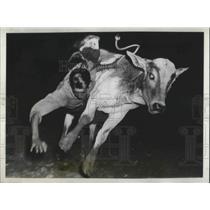 1938 Press Photo Calf Throws Boy in Kid's Rodeo, El Paso, Texas - nec50631