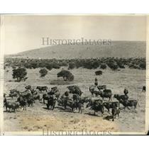 1926 Press Photo A view of a ranch in South Africa.