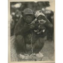 1915 Press Photo A Gorilla holding a puppy on a stoop