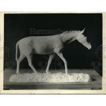1920 Press Photo In the Miocene period we find hypohippus