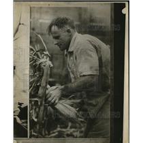 1926 Press Photo J. Williams Picking Corn