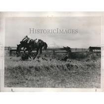 1938 Press Photo Cowbow & his horse crash thru a fence