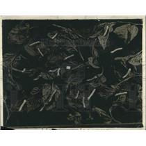 1920 Press Photo Silk Worms