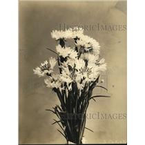 1924 Press Photo Ragged robin flowers displayed in a vase
